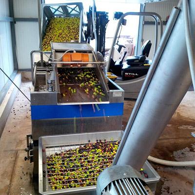 Étape transformation olive en huile d'olive - Domaine de l'Arbre Blanc